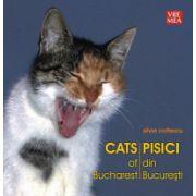 Pisici din Bucuresti. Cats of Bucharest